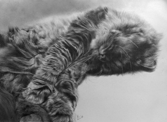 Paul Lung's drawing of a cat